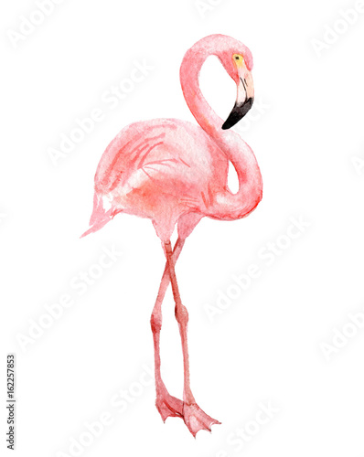 Fotografia  Flamingo, isolated on white background, watercolor illustration