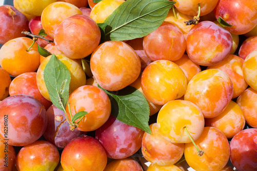 Gold yellow plums