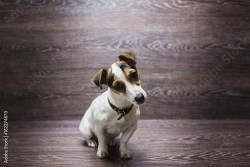 Keuken foto achterwand Kat Pretty puppy is staring with curiosity
