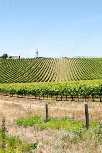 Fotobehang Wijngaard Wine country road