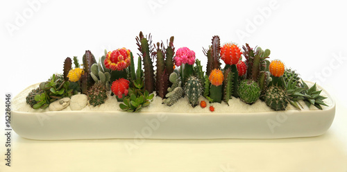 Attractive Elegant And Beautiful Cactus Container Garden With Blooming Cactus Flowers.