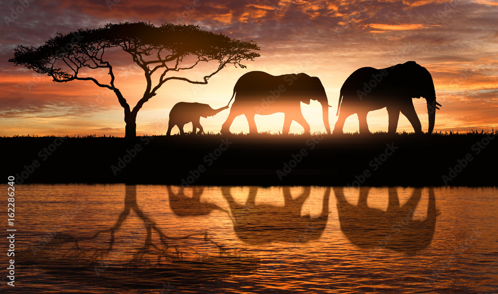 Fototapety, obrazy: family of elephants