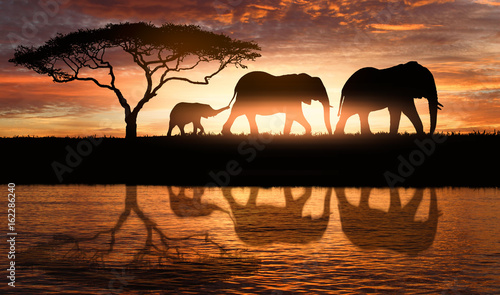 Deurstickers Afrika family of elephants