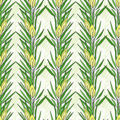 FototapetaSeamless pattern with rooibos plant. Herbal tea packaging design. Vector nature print.