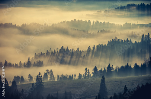 Poster Ochtendstond met mist Misty mountain forest landscape in the morning, Poland