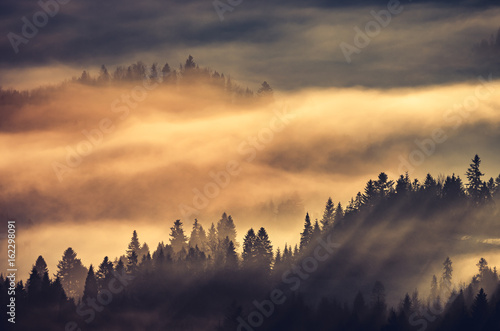 Foto auf AluDibond Gebirge Misty forest landscape, panorama of Carpathian mountains in Poland