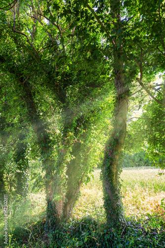 malownicze-drzewa-oswietlone-promieniami-slonecznymi