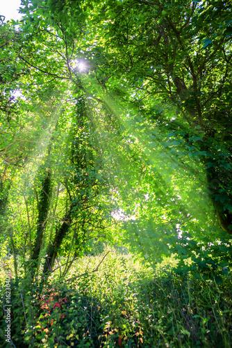 lesna-polana-posrod-drzew-oswietlona-porannym-sloncem
