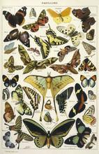 Butterflies In Larousse. Date:...
