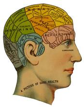 Phrenological Head. Date: Circa 1870
