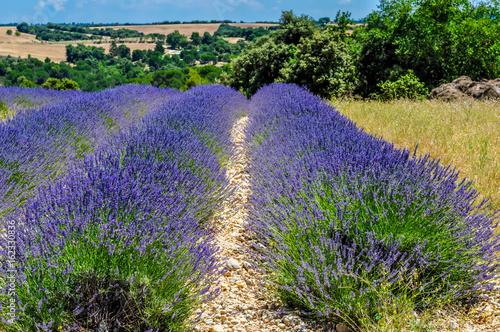 Foto op Plexiglas Lavendel Champs de lavande.