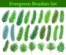 Collection Of Evegreen Coniferous Trees Branches Brushes Like Fir, Cedar, Pine, Cypress, Spruce With Differrnt Types Of Needles For Your Christmas, Winter, Seasonal Designs. Included In Brush Library.