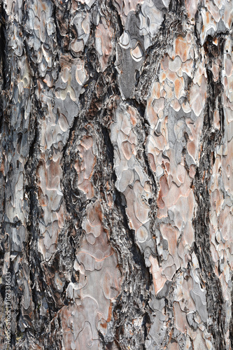 Bark close up