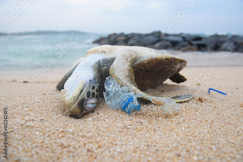 Poster Schildpad Dead turtle among plastic garbage from ocean on the beach