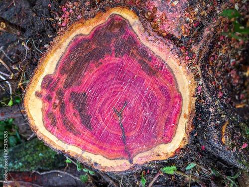 Red Blackthorn Wood Cutoff