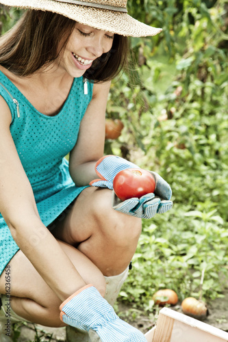 Young woman harvesting tomatoes in vegetable garden