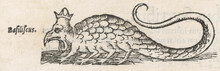 Folklore: Basilisk. Date: 1553