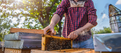 Beekeeper checking beehives Canvas Print