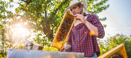 Beekeeper checking beehives Canvas Print