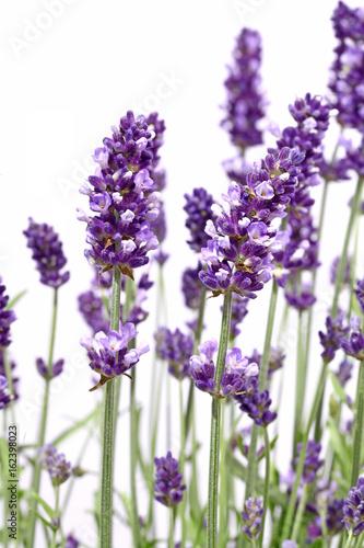 Tuinposter Lavendel Brins de lavande