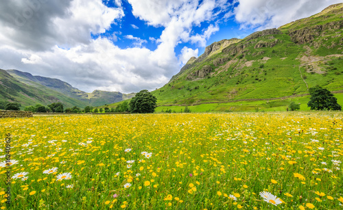 Foto auf AluDibond Orange Colourful meadow in Langdale valley, The Lake District, Cumbria, England