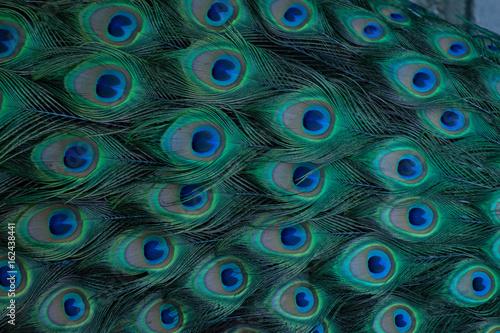 Foto op Aluminium Pauw Peacock Pattern