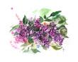 watercolor illustration lilac.