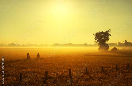 Foto op Aluminium Zwavel geel Sunrise over a rice field in Vietnam.