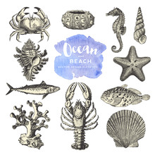 Retro Vector Design Elements: Ocean And Beach - Collection Vintage Sea And Summer Themed  Illustrations Featuring A Starfish, A Sea Urchin, A Crayfish / Lobster, A Seahorse, Fish, Shells And Corals