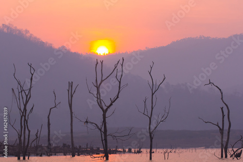 Cadres-photo bureau Lavende Dry tree in Mawngad Dam with sun, Chiangmai Thailand, lanscape