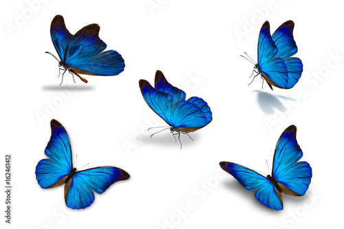 La pose en embrasure Papillon fifth blue butterfly