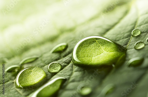 Foto op Plexiglas Natuur Large beautiful drops of transparent rain water on a green leaf macro. Drops of dew in the morning glow in the sun. Beautiful leaf texture in nature. Natural background.