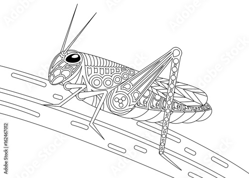 Leinwand Poster Monochrome grasshopper coloring page black over white.