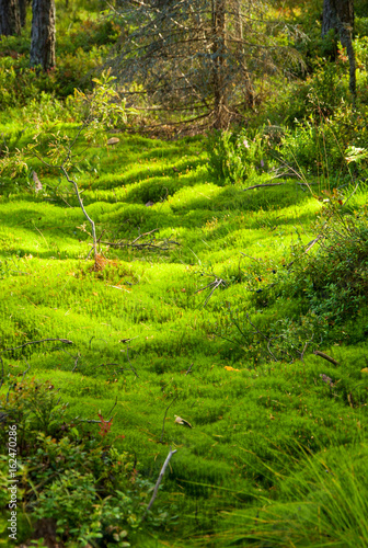 In de dag Lime groen Summer landscape of Karelia
