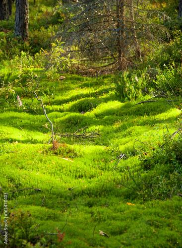 Poster Lime groen Summer landscape of Karelia