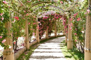 Fototapetaハイジの村 薔薇の回廊