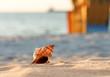 Muschel am Strand Hintergrund