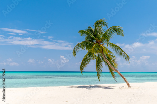 Fototapeta View of tropical beach with palms