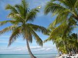Fototapeta Krajobraz - république dominicaine dominican repubic island