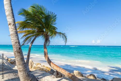 Foto auf Gartenposter Karibik Palmen Punta Cana Bavaro Strand Dominikanische Republik