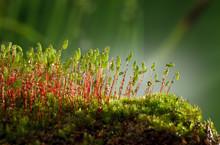 Mossy Hummock