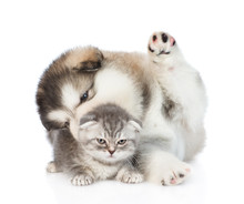 Puppy And Kitten Playing Toget...