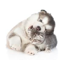 Puppy Biting Kitten. Isolated ...