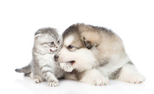 Puppy Playing With A Kitten. I...