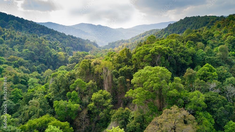 Fototapeta Rainforest aerial view in Thailand