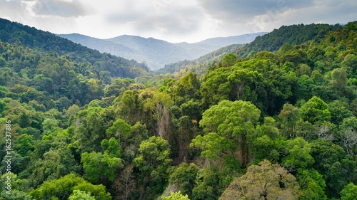 Rainforest aerial view in Thailand Fotobehang