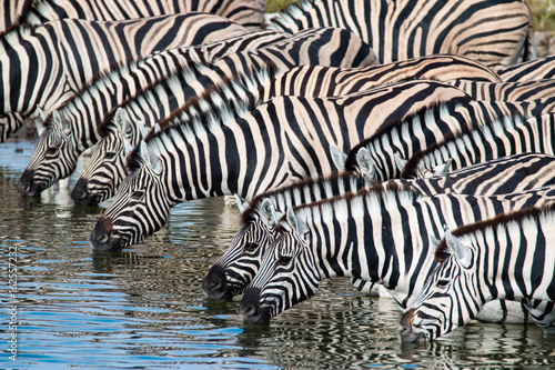 Poster Zebra Zebras at a waterhole in Etosha National Park, Namibia