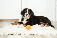 Cute Funny Dog Lying On Rug Near Door At Home