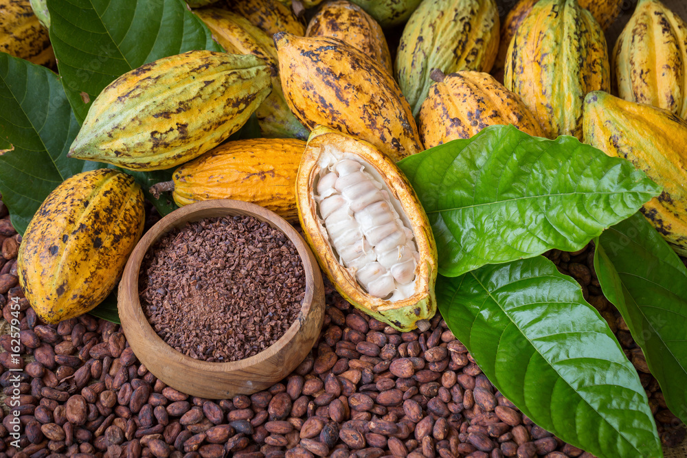 Fototapety, obrazy: Ripe cocoa pod and nibs, cocoa beans setup background