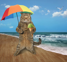 The Cat  With An Umbrella And Fruit Ice Cream Is On The Beach.